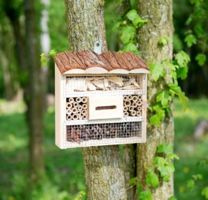 royal gardineer - hotel insectes